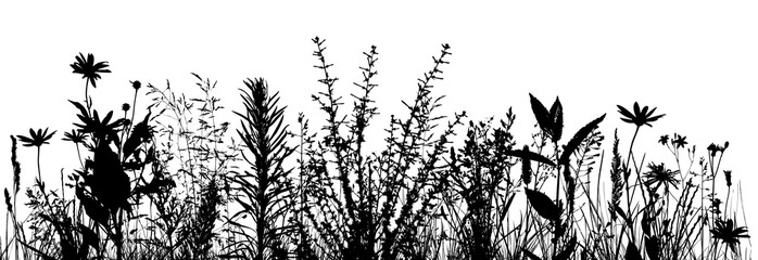 silhouette of grass on white background. Vector illustration