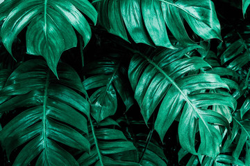 nature jungle leave dark background Wall mural