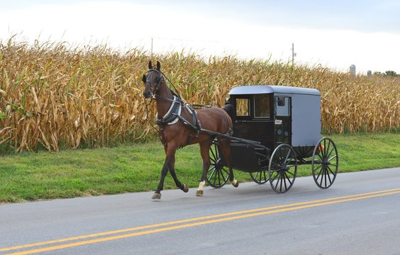 An Amish carriage driver in Pennsylvania.