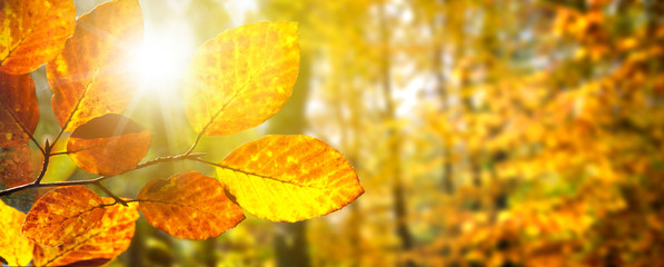 Spoed Foto op Canvas Olijf Banner Herbstwald im Gegenlicht