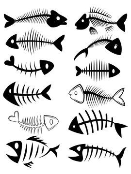 Set of silhouettes of fish skeletons. Collection of fish bones. Black and white vector illustration. Tattoo.
