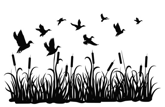 A flock of wild ducks flying over a pond with reeds. Black and white illustration of ducks flying over the river. Vector drawing of a wild bird for the hunter.