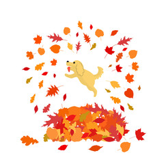 Happy dog is jumping to big heap of autumn leaves. Isolated on a white background. Stock vector illustration.
