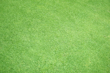 Green grass background green lawn pattern textured background.