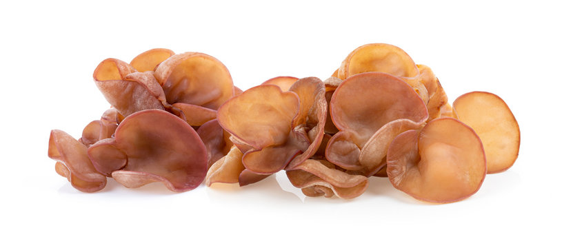 Jew's ear, Wood ear, Jelly ear isolated on white background. full depth of field