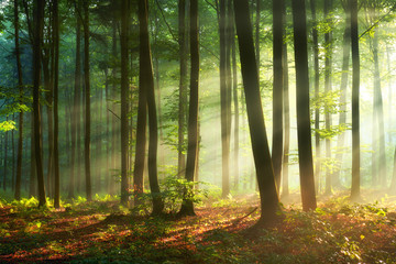 Fotobehang Bomen Beautiful morning in the forest