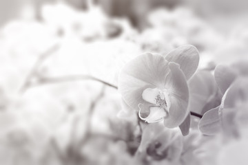 orchid.ch
