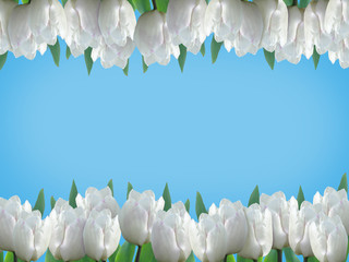 Card with white tulips on a blue background.