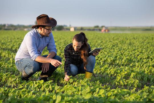 Two farmers in soybean field