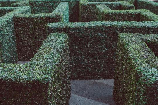 Hedge Labyrinth on stone floor