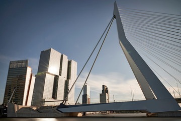 Canvas Prints Swan Erasmus bridge in the city centre of Rotterdam