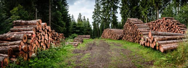 Holz Stapel Forstarbeit