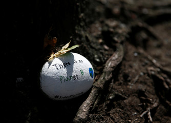 """A small painted rock left under a tree reads """"There is no planet B"""" during a Climate Strike walkout and march in Seattle"""