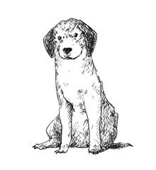 座る垂れ耳の犬