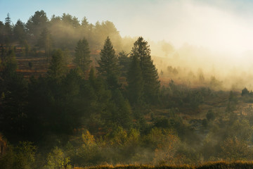 Natural autumn landscapes with trees covered with yellow and red leaves and morning mountain fogs.