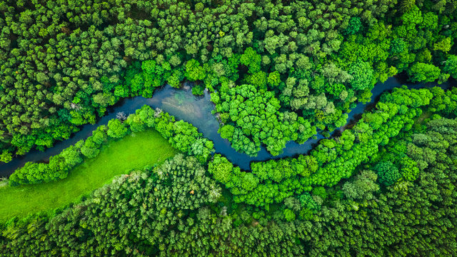 River and green forest in Tuchola natural park, aerial view