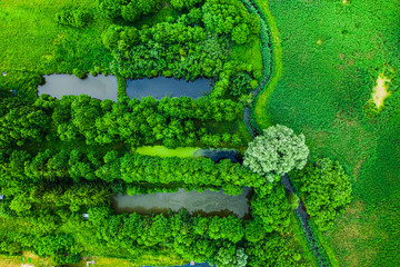 River and small fish ponds in summer, Poland from above