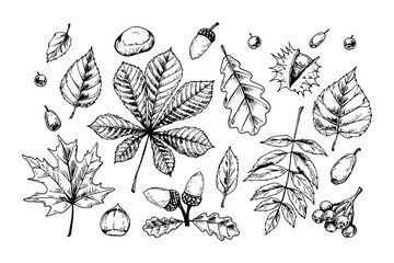 Detailed hand drawn sketch of autumn leaves and forest design elements isolated on white. Vector illustration. Vintage line art Wall mural
