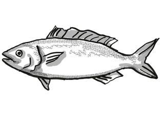 Kahawai New Zealand Fish Cartoon Retro Drawing
