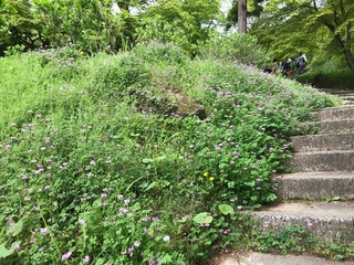 Stairs and Grass in Park
