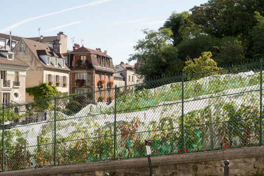 Le Clos Montmartre , the Vineyard of Montmartre created by the City of Paris in 1933 a Vineyard in the 18th arrondissement