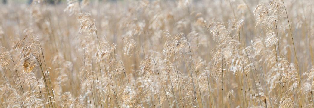 Panoramic background of hay straws