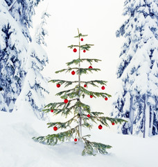 Real, live Christmas tree outdoors with snowy forest nature landscape background. Beautiful, simple winter holiday snow scenes.