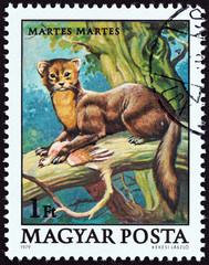 European pine marten, Martes martes (Hungary 1979)