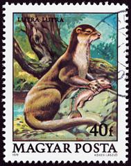 European otter, Lutra lutra (Hungary 1979)