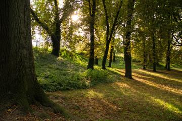 Wczesna jesień w parku