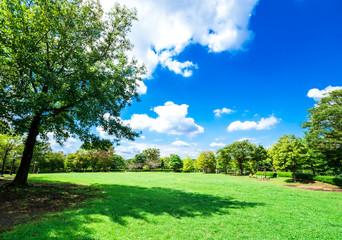 青空と木陰のある公園