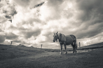 Monochrome horse in the mountain picture