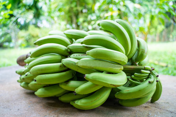 1 bunch of green bananas