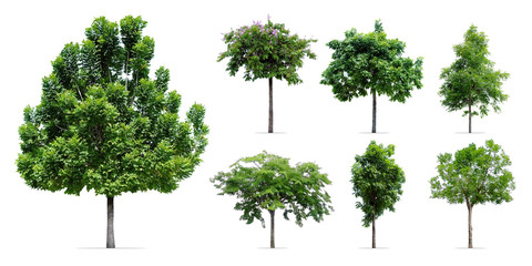 trees collection isolated on white background