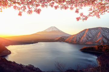 Wall Mural - Sunrise over Fuji san mountain and pink sakura