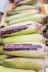 Close-up view of the purple corn.