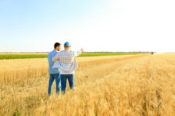 Fototapeta Male farmers working in wheat field obraz