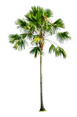 Photo Stands Roe palm tree isolated on white