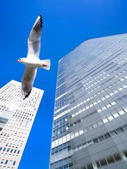 Fototapete - 高層ビル街を飛ぶカモメ