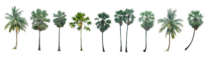 In de dag Palm boom Coconut tree with isolated on white background