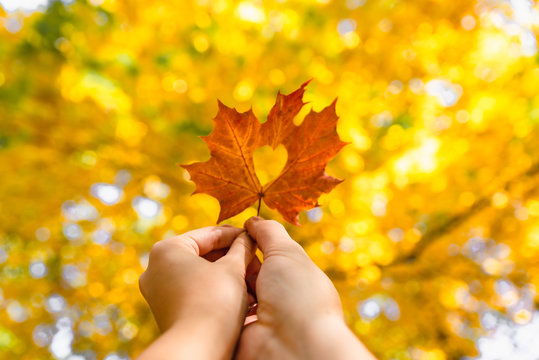 yellow maple leaf in hand with heart in the middle