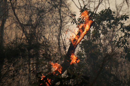 Tree trunk burns in a forest near Santa Monica community in Concepcion