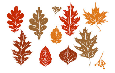 Wall Mural - Fall maple leaves for decoration
