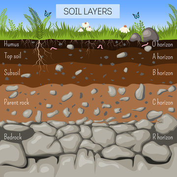 Soil layers diagram with grass, earth texture, stones, plant roots, underground species.