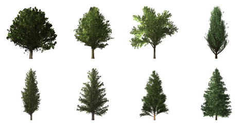 Collection of isolated trees on white background