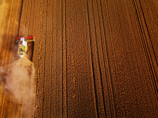 Wall Mural - Wheat field ready for harvest