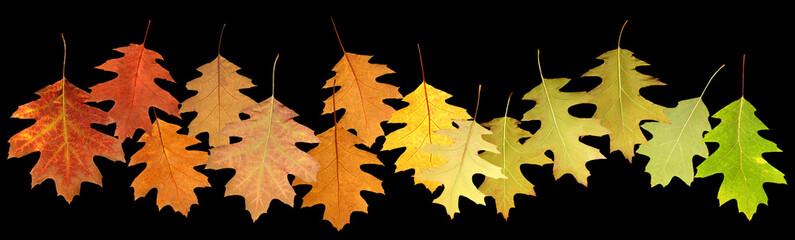 closeup image of autumn leaves on black background