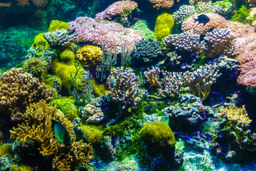 Photo of a coral colony,