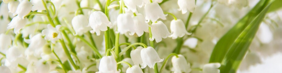Photo sur Plexiglas Muguet de mai banner of Lily of the valley flowers. Natural background with blooming lilies of the valley lilies-of-the-valley