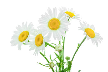 Foto op Canvas Madeliefjes one chamomile or daisies with leaves isolated on white background